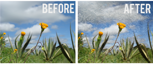 flower before after copy