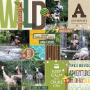 Disney Jungle Cruise digital pocket scrapbooking page by melinda using Project Mouse (Adventure) by Britt-ish Designs and Sahlin Studio